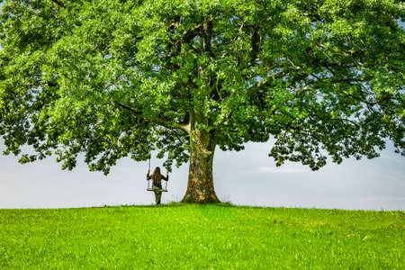 Swing on an old oak tree