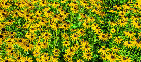 Flower bed with yellow coneflower