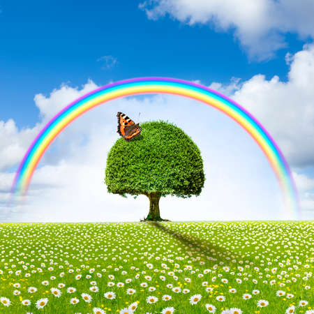 Tree in flower meadow with rainbow