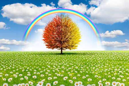 Red tree in flower meadow with rainbow
