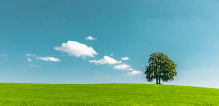 Green tree on a hill