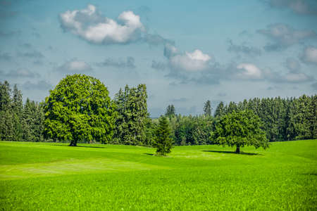 Green trees in a hilly landscape