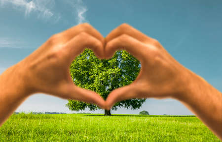 Heart hand with a green tree