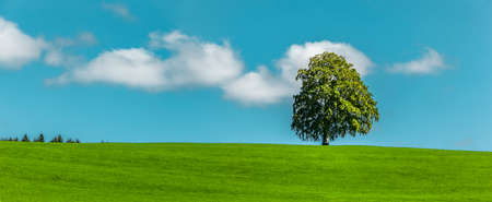 Tree on a hill with blue sky
