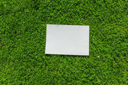 White sheet of paper in front of green leaves