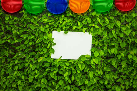 White sheet of paper in a hedge with paper lanterns