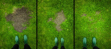 Grass seed growth in the garden