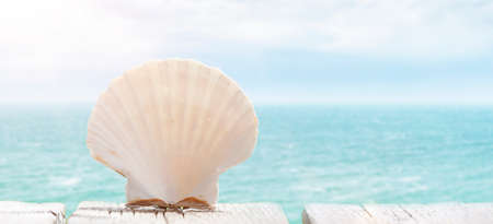 Scallop shell on the beach with ocean in the background 스톡 콘텐츠