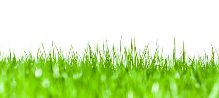Green grass against a white background 스톡 콘텐츠