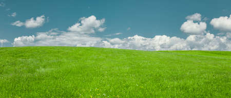 Sky with white clouds over a green meadow