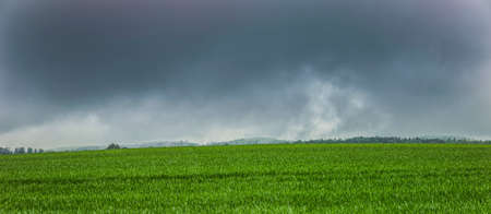 Dark storm clouds over a corn field