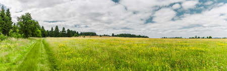 Hiking trail through meadow landscape in the Rhön