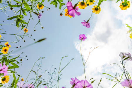 Frame made of meadow flowers photographed from below