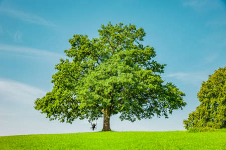 Green tree on a hill in natural landscape