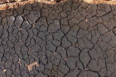 Dry soil in a bog lake Zdjęcie Seryjne
