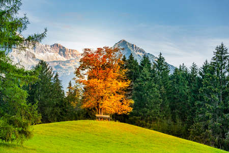 Landscape near Oberstdorf in Allgäu with view of Allgäu high alps in Indian summer Фото со стока