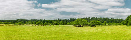 Landscape with cows in Rhön