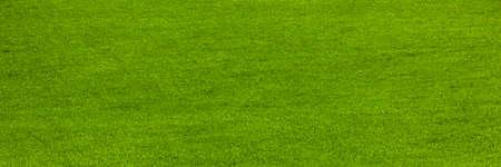 Green freshly mowed lawn in summer Фото со стока