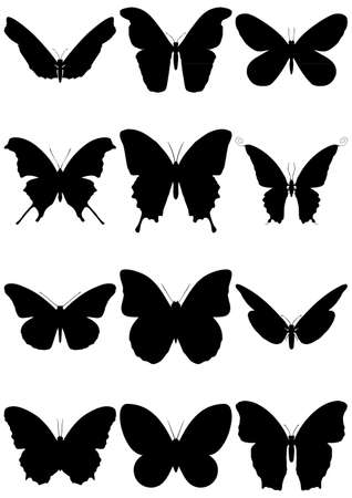 illustration set of 12 butterfly silhouettes. Illustration