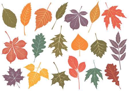 illustration set of 19 autumn leaves.