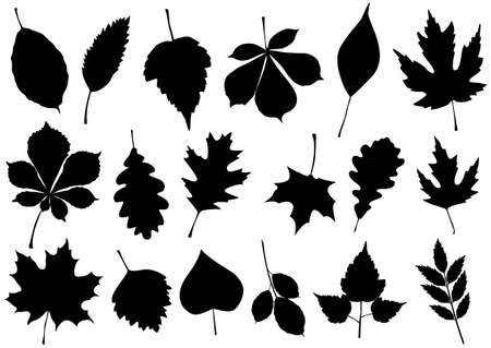 illustration set of 18 autumn leaf silhouettes. Ilustrace