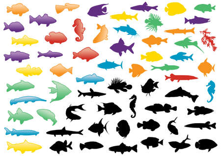 freshwater fish: Illustration set of fish silhouettes. All objects are isolated and grouped. Colors and transparent background color are easy to adjust. Illustration