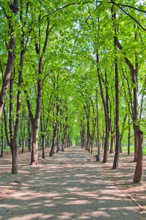 shady: Shady avenue in spring park