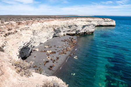 patagonia: A colony of sea lions on a beach south of Puerto Madryn, Argentina  Stock Photo