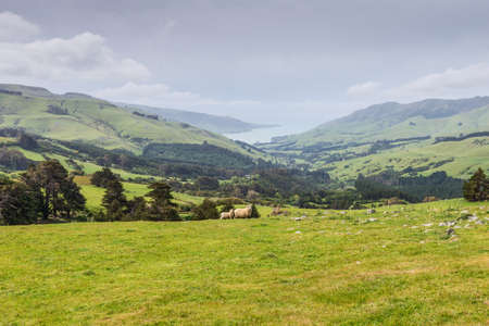 Two lambs grazing on the picturesque New Zealand landscape background photo