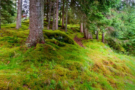 scandinavian peninsula: Moss and grass covered stones on the forrest floor in the woods in the Northern Scandiavian country of Norway. There