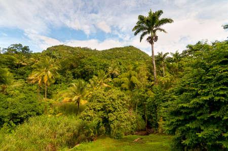 extreme terrain: Rainforest on Dominica