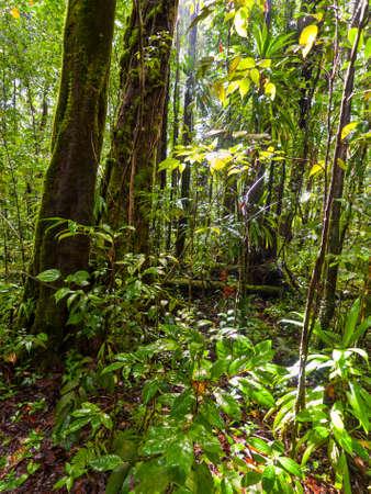 Scene in rainforest