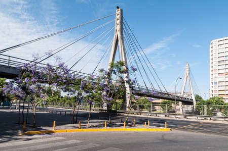 proved: Santiago, Chile - December 2, 2012: Jacaranda trees in bloom near the Huerfanos Footbridge in Santiago de Chile. A cable-stayed bridge proved to be the best solution to avoid interference with road and metro traffic.