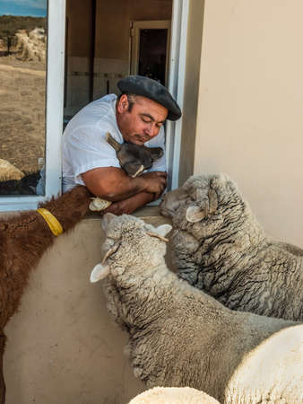 argentinean: Puerto Madryn, Argentina - December 13, 2012: Argentinean farmer with their animals on the farm near Puerto Madryn, Patagonia, Argentina. The raising of sheep and the wool industry is a major source of income in the rural countryside of Argentina.