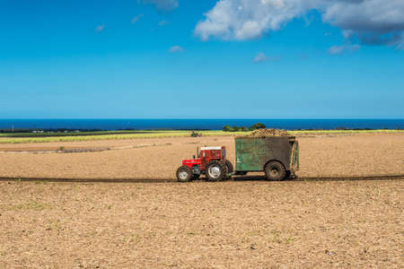 Cascavelle, Mauritius - December 10, 2015: Mauritius sugarcane harvest on the field with harvesters and truck with full load of harvested sugarcane in the countryside near Cascavelle, Mauritius. Agricultural landscape of Mauritius. Editorial
