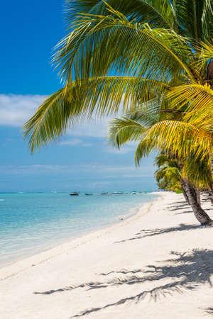 morne: White sand on a tropical beach Le Morne, Mauritius.