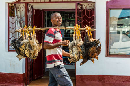 ville: Hell Ville, Madagascar - December 19, 2015: Malagasy trader carries chickens to the market in Hell Ville, a town at the Nosy Be island, North of Madagascar.