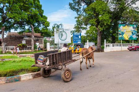 cartage: Hell-Ville, Madagascar - December 19, 2015: Traditional Zebu bull wagon along the street at Hell Ville, Nosy Be Island, Madagascar.