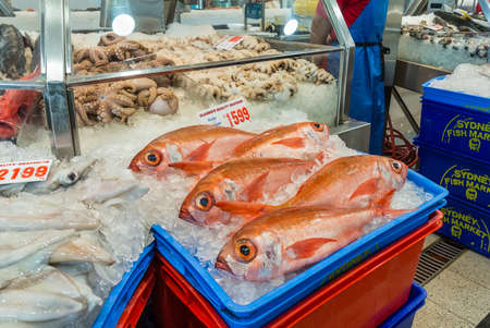 tonnes: Sydney, Australia - November 11, 2014: Fresh Ruby Snapper fish and other seafood on the Famous Sydney Fish Market, Sydney, New South Wales, Australia.. 52 tonnes of seafood are selling at auction on this market every day.