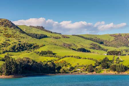 Rural Scene and Sheep Farm near Dunedin at Otago Region Southern island New Zealand 版權商用圖片