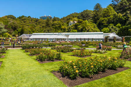 wellington: Wellington, New Zealand - November 18, 2014: The Lady Norwood rose garden in the Wellington Botanic Garden, Wellington, New Zealand.