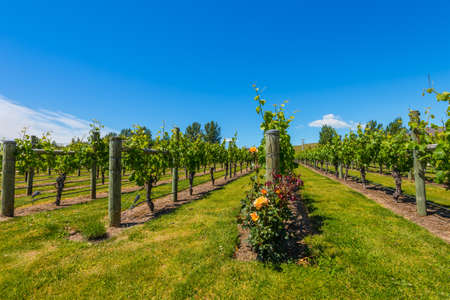 wine country: New Zealands wine country is located in Napier near Hawkes Bay