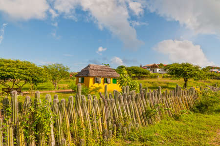 bonaire: Yellow house and the fence of cactus on the island of Bonaire in the Caribbean - Netherlands Antilles