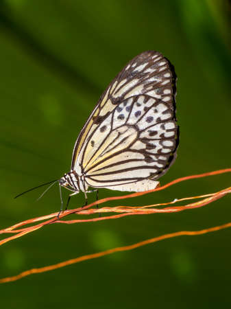 profile view: Butterfly - eye-level, close up and profile view. Stock Photo