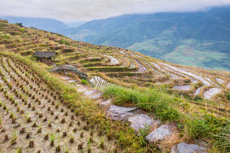 Chinese rice fields in cloudy weather Stock Photo