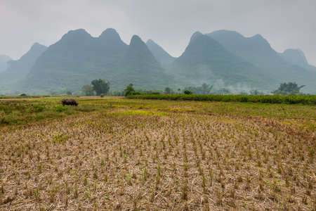Agricultural field after harvest in rainy weather near Yangshuo, China