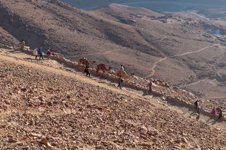 monte sinai: Monte Sinaí, Egipto - 25 de noviembre de 2010: Los peregrinos descienden del Monte Sinaí después de reunirse con la salida del sol. Beduinos con camellos ayudan a las personas a 25 de noviembre de 2010. Cada día cientos de turistas recibidos la salida del sol en el Monte Sinaí. La creencia de que todos los pecados serán f