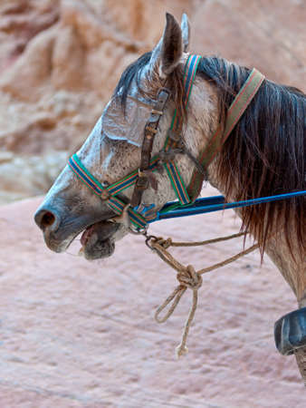 blinders: Close up of a horse with blinkers