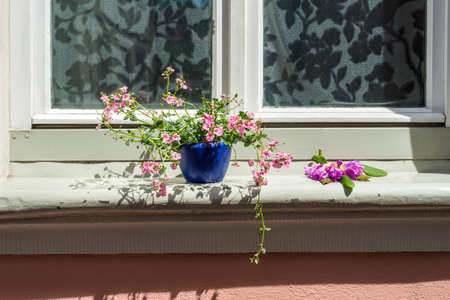 old house window: An old house window decorated with flower pots in Bamberg, Germany