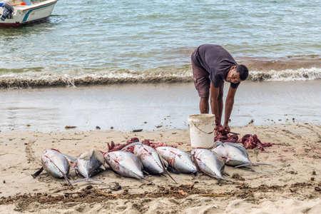 Tamarin, Mauritius - December 10, 2015: Fisherman handles freshly big tuna fish on the beach of Tamarin Bay in Mauritius.